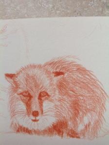 fox portrait image