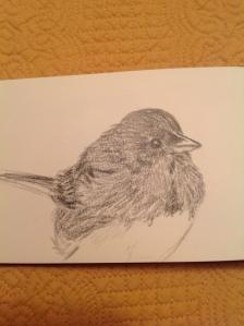 junco drawing