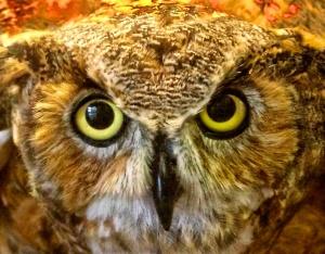 OwlEyes1