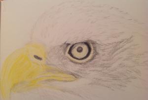 eagle cropped 02032015
