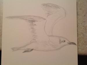 gull drawing 02052015
