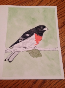 rosebreasted grosbeak 02162015