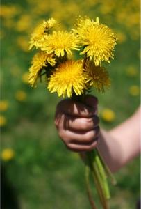 dandelion-bouquet