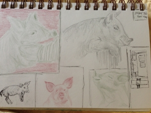 pig 2nd page