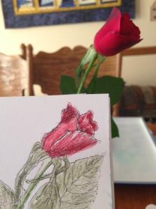 rose 0527