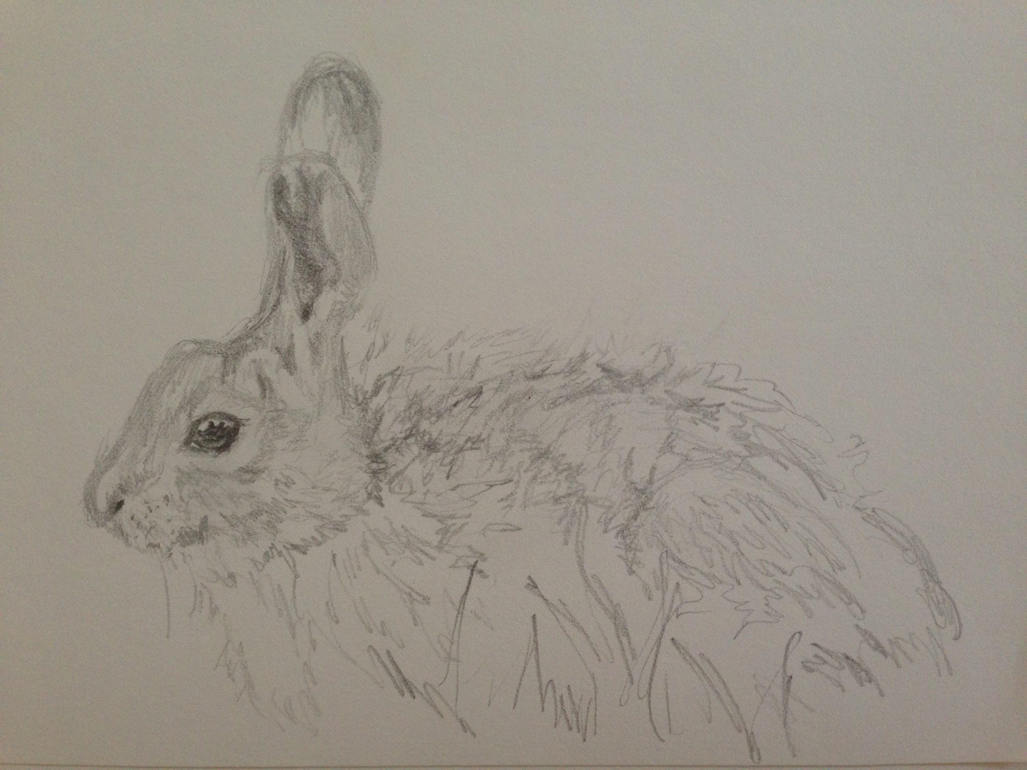graphite bunny 100 face challenge 70 u2013 create art every day